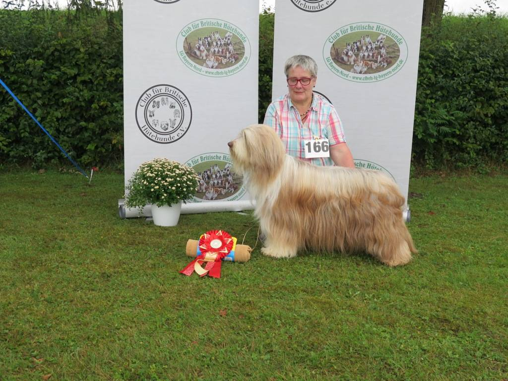 BOB Bearded Collie Midlands-Corner Hazel Muffin